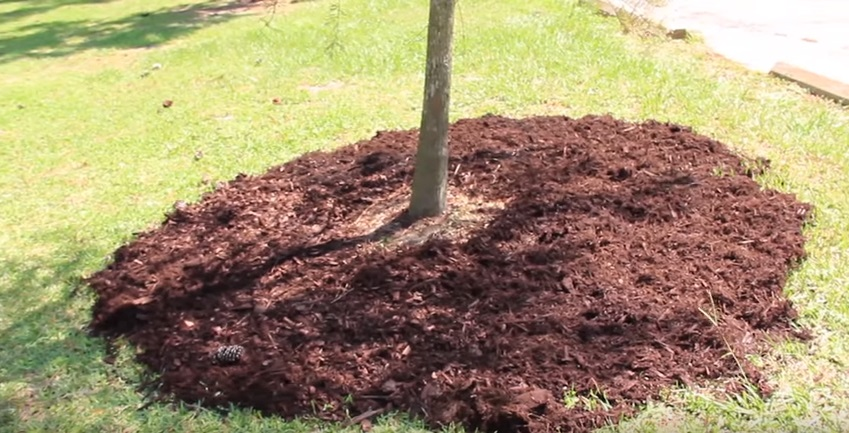 How to mulch trees